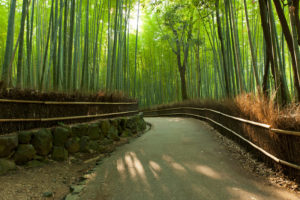 Photo of Arashiyama Bamboo Forest in Kyoto, Japan
